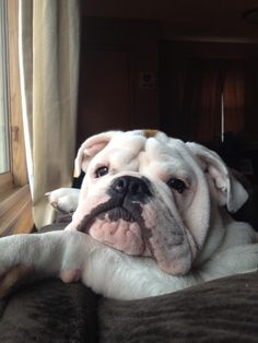 ❤ Waiting .... for the Peeps to come back home ❤ Posted on I love English Bulldogs