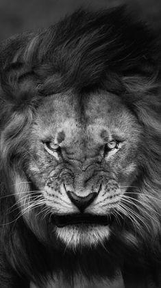 Angry-Lion-Face-Wallpaper-iPhone-Wallpaper-iphoneswallpapers_com. Unicornios Wallpaper, Animal Wallpaper, Wallpaper Backgrounds, Wallpaper Downloads, Lion Wallpaper Iphone, Trendy Wallpaper, Pastel Wallpaper, Backgrounds Free, Lion Images