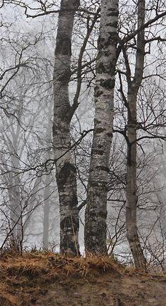 ♂ grey trees misty forest Almost spring - Akerselva, Oslo. Photo: Åse Margrethe Hansen, 2013
