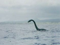 The Loch Ness Monster is a cryptid, reputedly a large unknown animal that inhabits Loch Ness in the Scottish Highlands. It is similar to other supposed lake . Weird Creatures, Mythical Creatures, Inverness, Paranormal, Lago Ness, Howleen Wolf, Legendary Monsters, Lake Monsters, Scary Tales