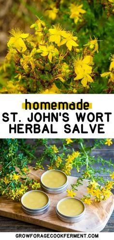 Learn all about foraging St. John's wort, how to harvest and use this medicinal plant, and how to make a pain-relieving infused oil and salve using fresh St. John's wort flowers. Natural Health Remedies, Herbal Remedies, Dandelion Oil, Infused Oils, Growing Herbs, Medicinal Plants, Herbal Medicine, St John's, Herbalism