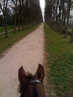 Al riding adventure in Versailles, France, as seen from the back of a horse