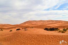 Descansa sobre un mar de dunas doradas en el #desierto del #Sáhara