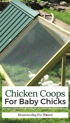 Chickens Backyard, Chicken Coop for Baby Chicks, DIY Chicken Coop #raisingchickensforbeginners #DIYchickencoopplans #chickencoopdiy