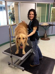 """Walden getting the """"works"""" as Jennifer does a de-shed #doggrooming #petgrooming #grooming"""