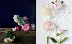 Kari Herer; Botanical blooms
