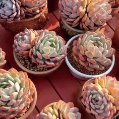 For how-to's, tips and tricks, and inspiration on all things succulents. check out our website for some helpful articles to encourage you to be the best succulent gardener! Succulent Planter Diy, Succulent Gardening, Succulent Care, Cacti Garden, Indoor Gardening, Gardening Tips, Growing Succulents, Cacti And Succulents, Planting Succulents