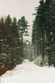 snow, winter, and forest image Winter Snow, Winter Time, Winter Christmas, Christmas Lounge, Winter Walk, Prim Christmas, Winter Holidays, Christmas Decor, Winter Wonderland