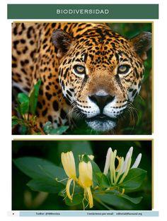 #Biodiversidad Fotografías #Revista400 #DesarrolloSustentable http://issuu.com/400revista/docs/revista_400_mayo_2015/4 Revista 400 Mayo 2015