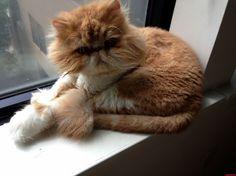 Can I Help You Asshole - http://cutecatshq.com/cats/can-i-help-you-asshole/
