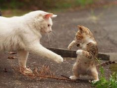 Τα πιο όμορφα γατάκια