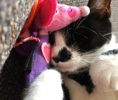 """Lily loves her Hem and Boo toy from July's @CatHampurr"""