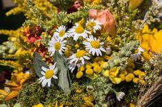 W sierpniu i pod koniec lata zbieramy wiele cennych ziół Diabetes, Plants, Diabetic Living, Plant, Planting, Planets