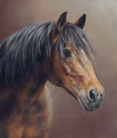 bay horse portrait by Mary Herbert