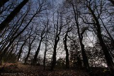 Forêt by Céline  Jacquinet on 500px