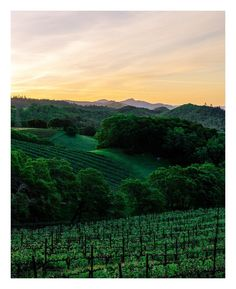 Sunrise in the mountains above #NapaValley . I've seen it before but from 1400 feet lower in the valley below. This view was new for me and something I'll definitely have to do a repeat of soon. #napa #sunrise #vineyard #winery #visitnapavalley #visitcalistoga #visitsthelena by adamdecker