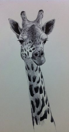 Ballpoint sketch of tonight is of a Giraffe. What fun this was.