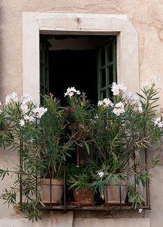 Wygelia on a balcony in Provence