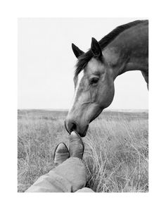 I want a picture like this with my horse.