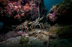 Lobster Hole - by: KIMBERLY PORTER