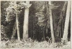 Leon Wyczółkowski - Wnętrze lasu