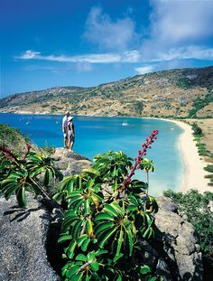 Lizard Island in Australia   Vacation Idea   - Explore the World with Travel Nerd Nici, one Country at a Time. http://TravelNerdNici.com