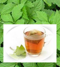 Ginkgo Biloba Herbs TEA - improves the brain function, helps memory -20 TEA BAGS #PathomAsoke