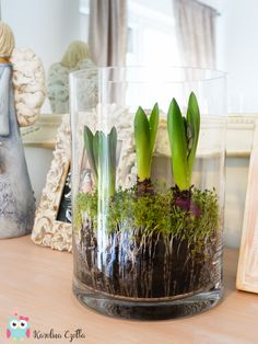 Wiosenne dekoracje z kwiatów rzeżucha w wazonie razem z hiacyntami