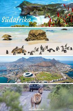 Südafrika ist das perfekte Einsteigerziel für Afrika-Touristen. Hier, rund um das wunderbar vielfältige Kapstadt, kann man sich akklimatisieren, traumhafte Aussichten genießen und sich von Natur und Kultur des Landes gefangen nehmen lassen. Der perfekte Start für eine dreiwöchige Camping-Tour durch Afrika.