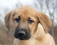 Hi! I'm Tessa, a beautiful 2 month old Shepherd mix! I'd love to grow up loved with a wonderful owner like you! #rescue #dogs #puppies #cute #Kansas City #Wayside Waifs
