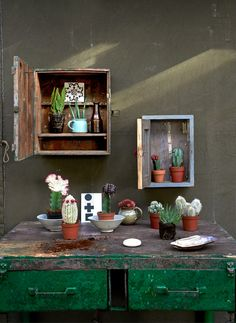 Plants in little closets #cactus #nature #green