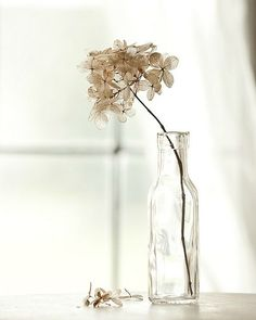 Not sure what kind of dried flowers these are, but they sure look pretty in that little glass bottle