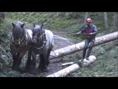 Débardage cheval - YouTube