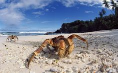 Image from http://defwalls.com/wallpapers-n/beach-animals-palm-trees-crabs-_2196-32.jpg.