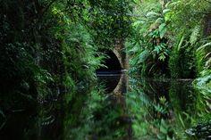The Jungle Tunnel