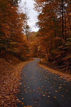 A lovely seasonal road covered in leaves near Skaneateles Lake, upstate New York. Maybe this is like the road that Cali runs on. Skaneateles Lake, Autumn Scenes, Autumn Cozy, Autumn Aesthetic, All Nature, Fall Wallpaper, Autumn Photography, Best Seasons, Fall Pictures