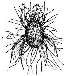 """""""Din lichidul chimic din care trebuia sa rezulte cristalele dorite au inceput sa """"creasca"""" insecte care semanau oarecum cu capusele sau cu puricii."""""""