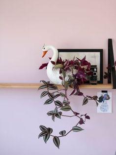 8 plantes dintérieur à suspendre dans son salon Indoor Garden, Indoor Plants, Wondering Jew, Apartment Plants, Decoration Plante, Plant Therapy, Hanging Plants, Succulents Garden, Trees To Plant