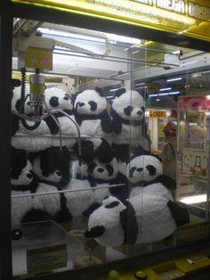 Pandas in UFO catcher