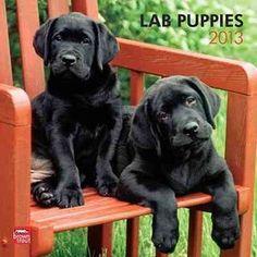 Lab Puppies 2013 Calendar