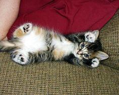 カワイイ猫画像 83|ねこLatte+