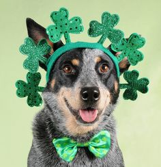 St. Patricks... spend it with someone you love.
