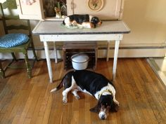 """cupcakes-and-lithium: """"A tale of 2 Molly dogs. """""""