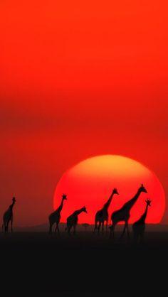 Maasai Mara National Amazing World