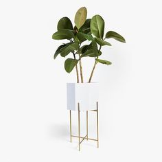 Image of the product LACQUERED PLANTER WITH GOLDEN BASE