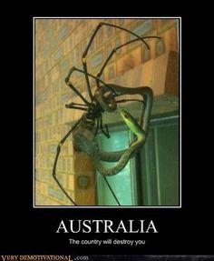 scary animal stuff @Sara Eriksson Pope would die if she saw the spider heheh lol :3