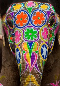 """Digital Travel Guide """"Wander across India : Embark on a unique trip that will undoubtedly be a constant learning experience, a remarkable challenge and a brilliant adventure. Elephant India, Elephant Face, African Elephant, Elephants In India, Mandala Elephant, Elephant Colour, Baby Elephants, All About Elephants, Elephants Never Forget"""