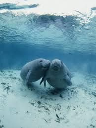 Barbara Manateeee, you are the one for me!