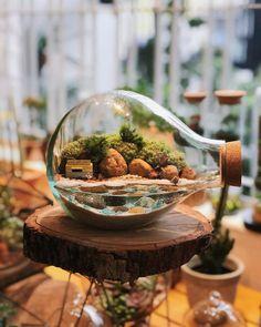 Terrarium Jar, Succulent Terrarium, Terrarium Scene, Diy Plante, Plants In Jars, Moss Decor, Diy Resin Crafts, Paludarium, Glass Containers
