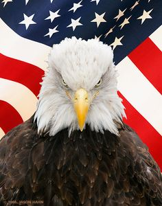 """Bald eagle says, """"If you knock on my door and enter my house you will respect my rules, my family and my God. Do we understand each other?""""                                                                                                                                                      More"""